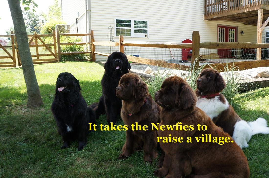 newifesvillage333_orig