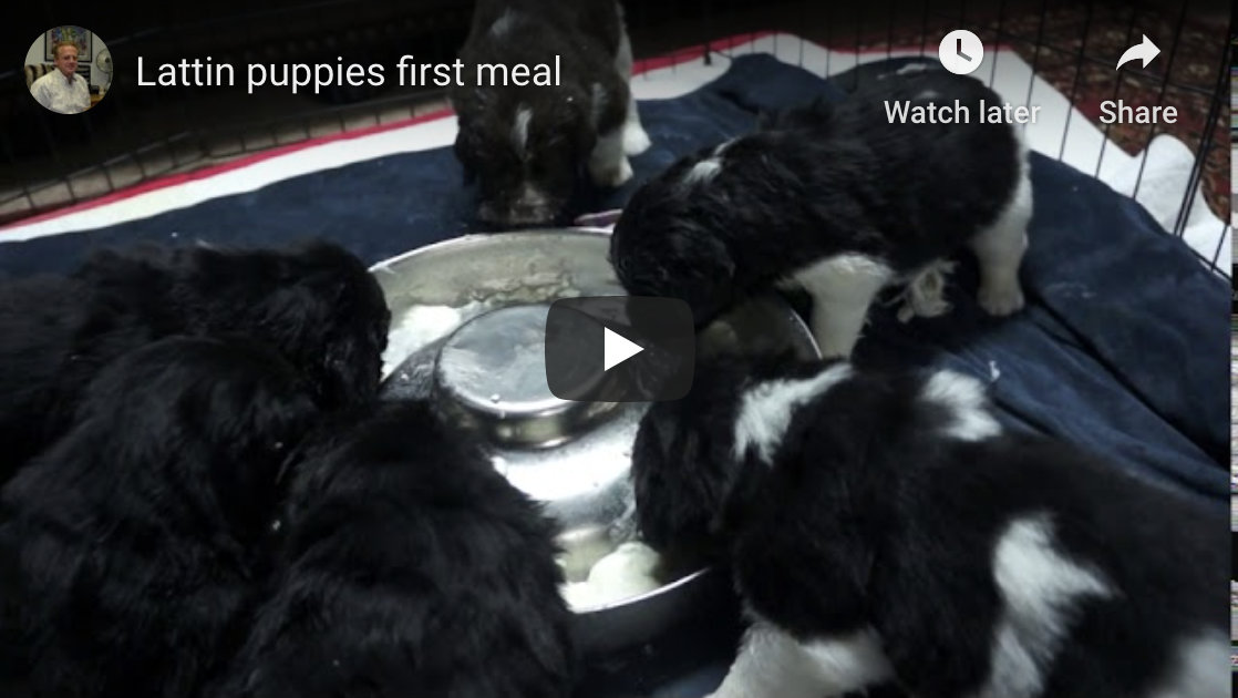 Puppies first meal