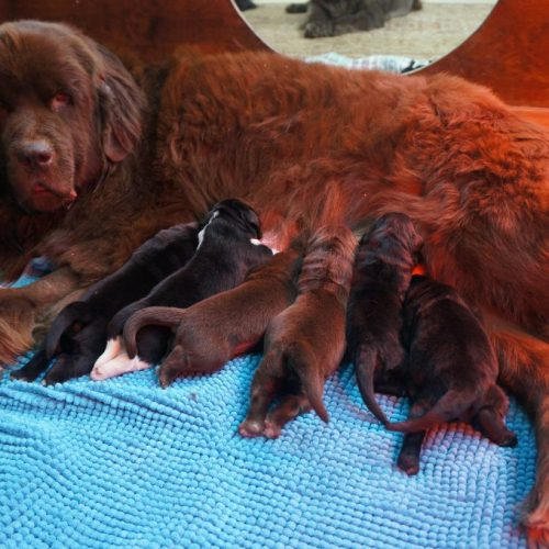 All of Athena's puppies have their new homes