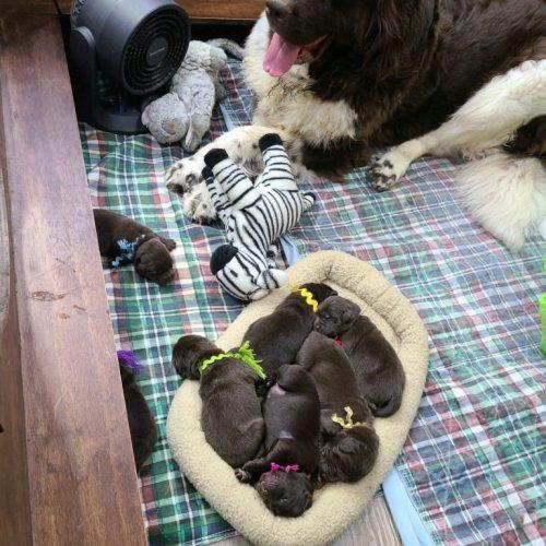 Arya puppies 5.20.2021